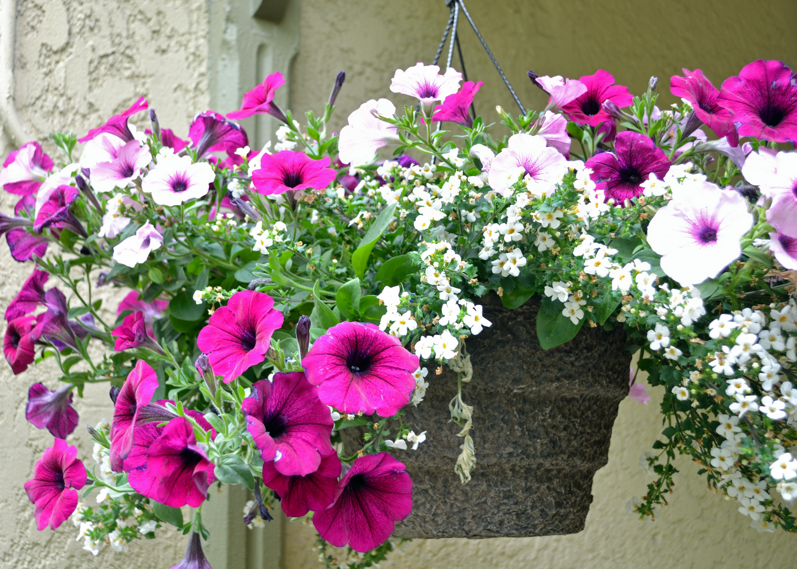 How to not kill hanging plants bring joy for Pot de fleur exterieur